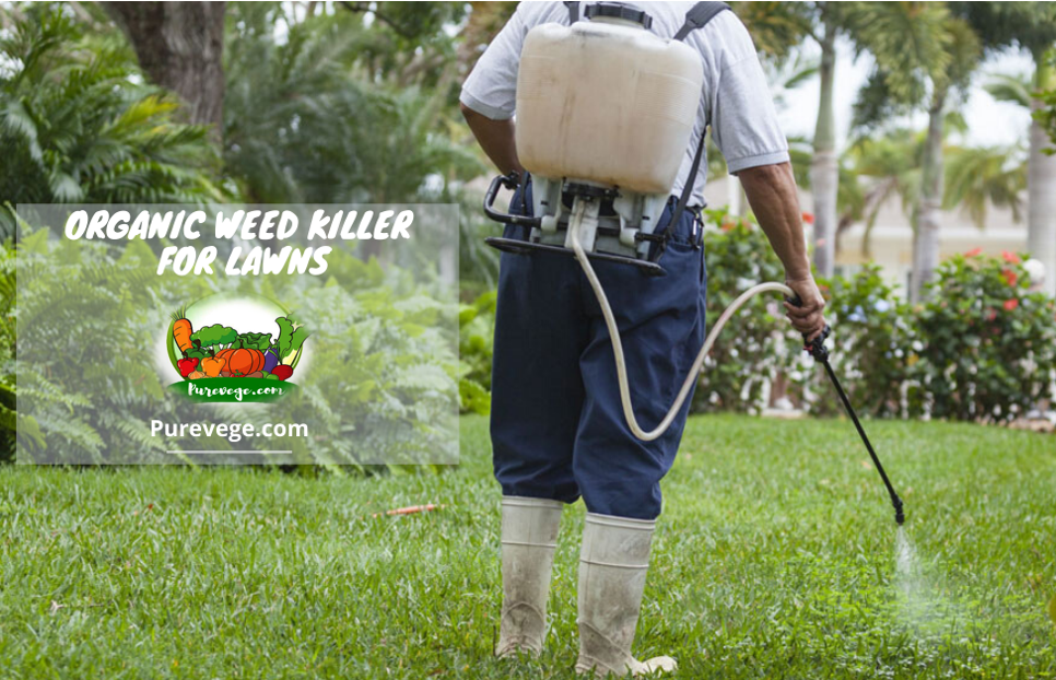 organic weed killer for lawns