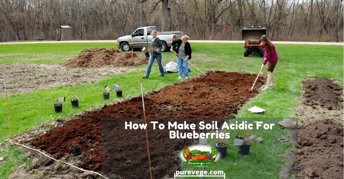 how to make soil acidic for blueberries