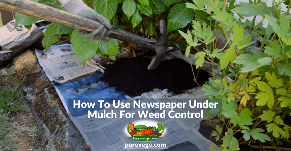 newspaper under mulch