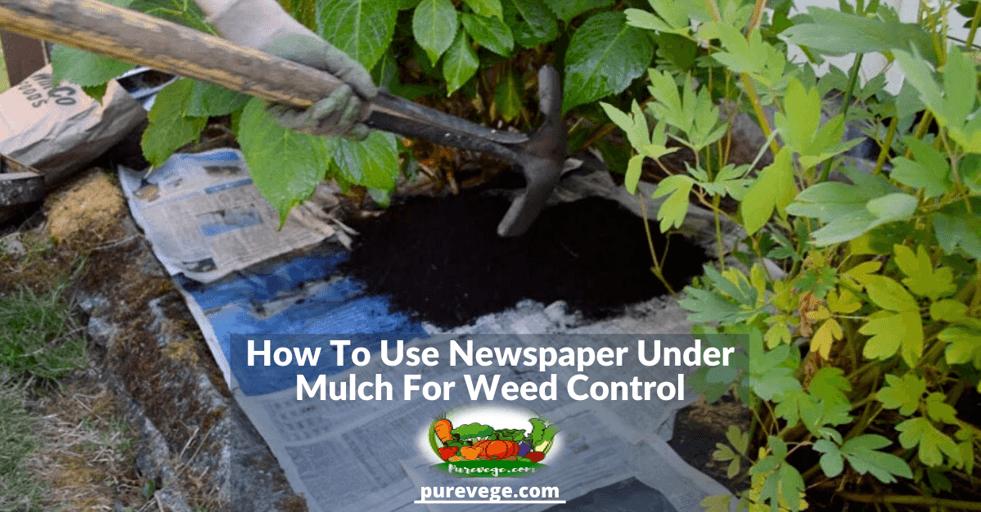 newspaper under mulch