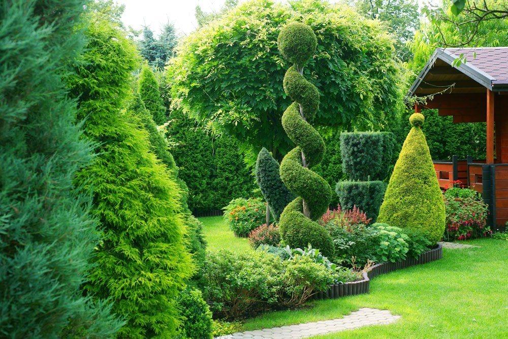 columnar shrubs