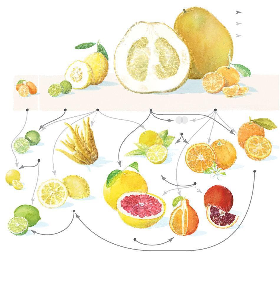 fruit list