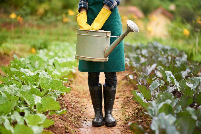 how often to water vegetable garden