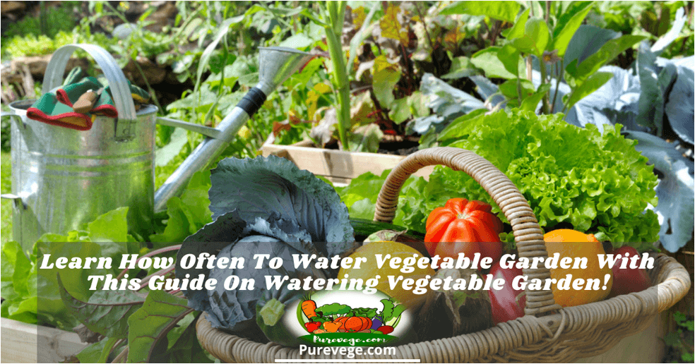 how often to water vegetable garden