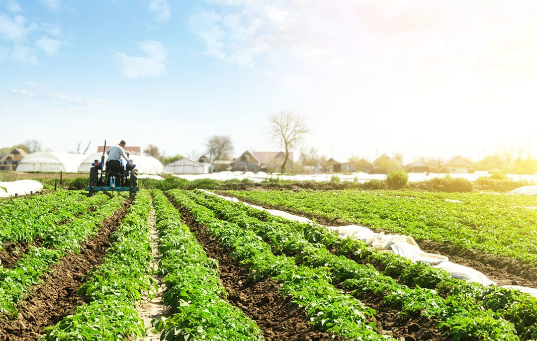 how to improve your vegetable yield this year